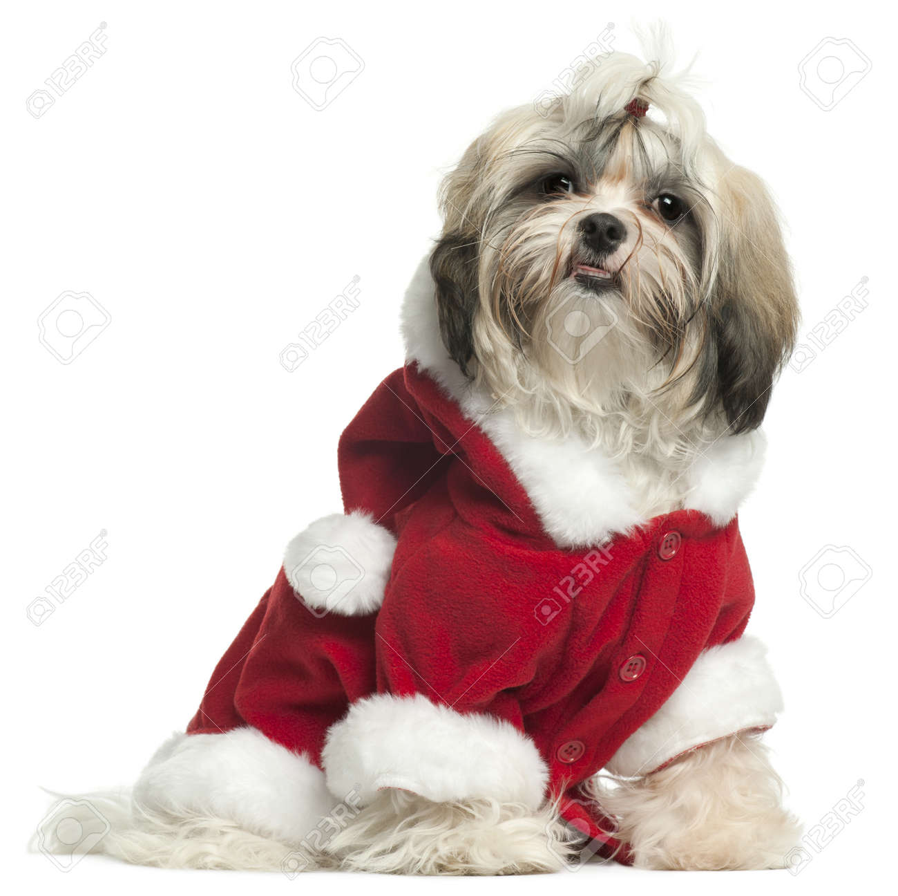 Shih Tzu puppy wearing Santa outfit, 9 months old, sitting in front of white background Stock Photo - 8650626