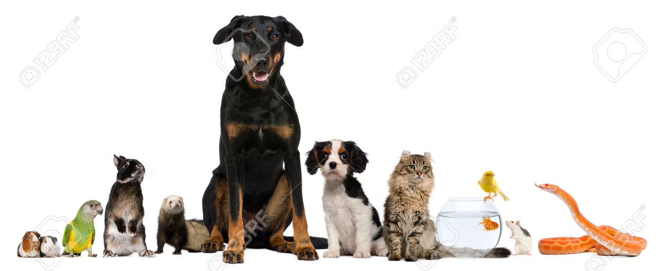 Group of pets sitting in front of white background Stock Photo - 9564379