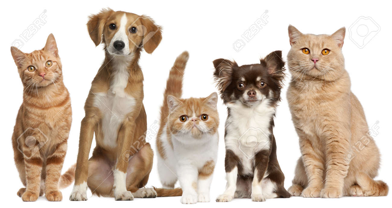 Group Of Cats And Dogs In Front Of White Background Stock Photo ...