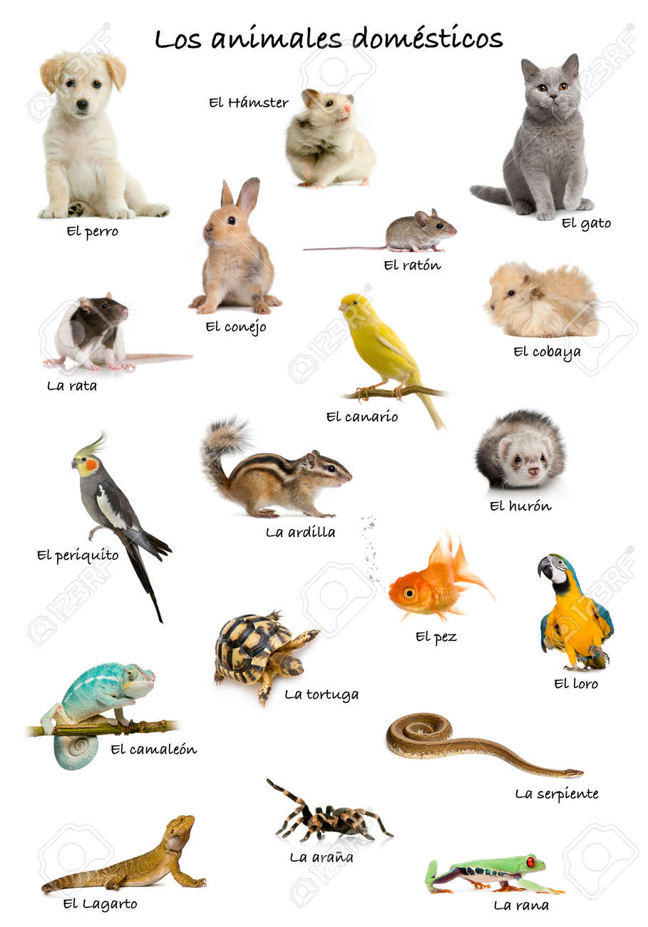 Collage Of Pets And Animals In Spanish In Front Of White ...