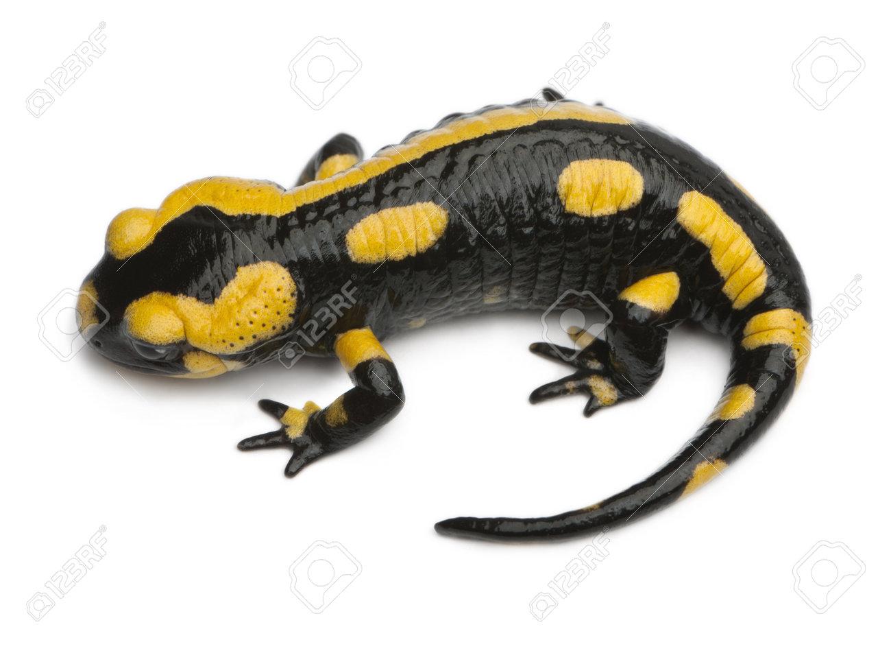 Glisser Salamandre Salamandre Gris DL9auIa