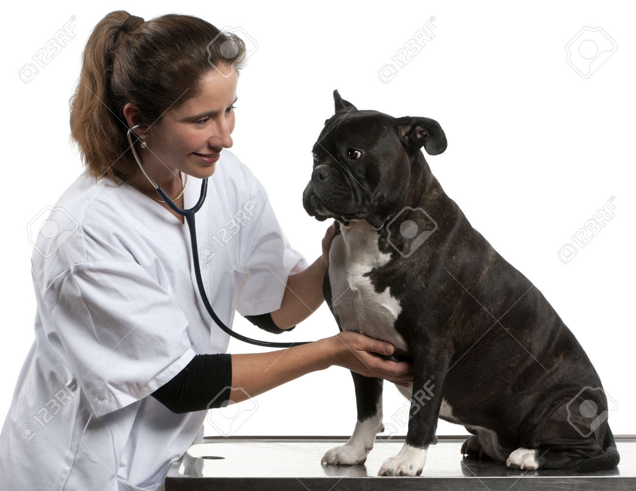 Vet examining a Crossbreed dog, dog with a stethoscope in front of white background Stock Photo - 12668036