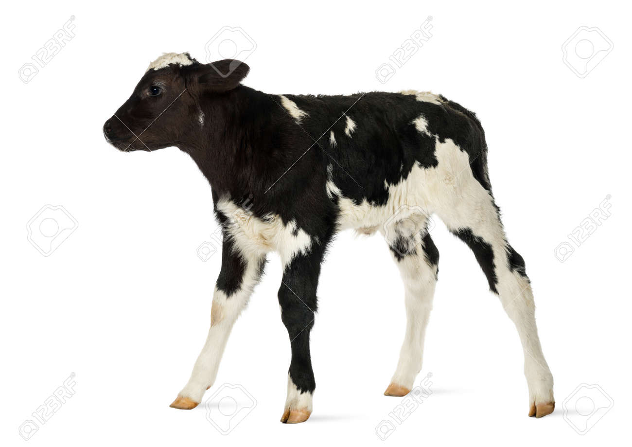 no cows stock photos royalty free no cows images and pictures