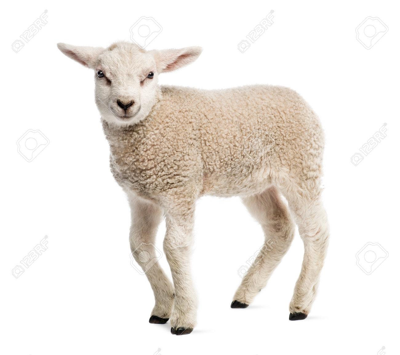 Recipes using lamb