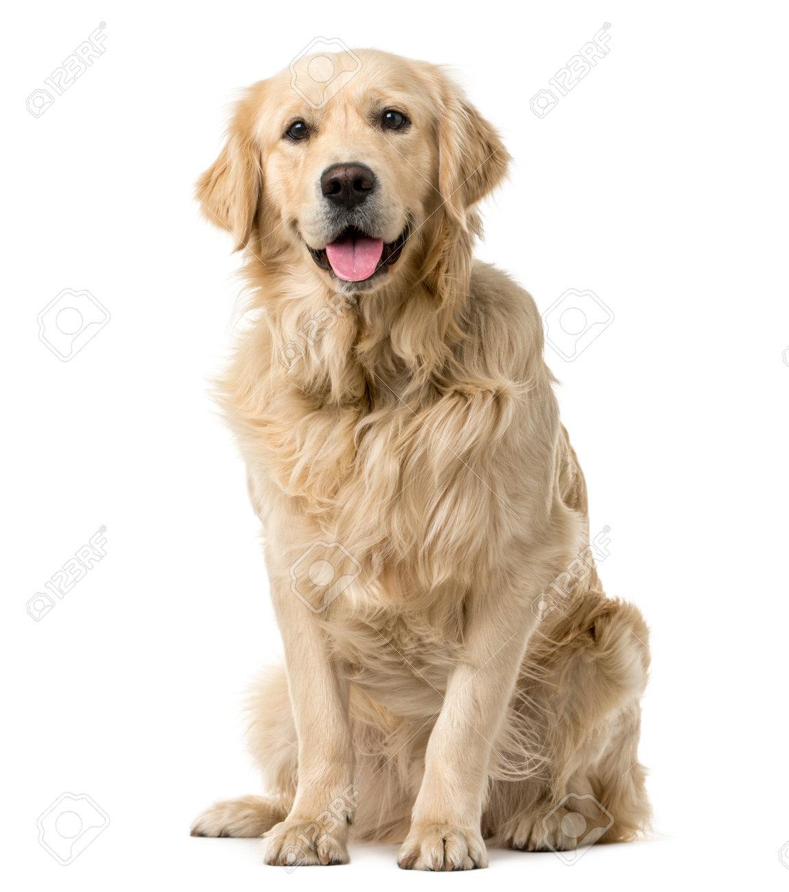dog stock photos royalty free dog images
