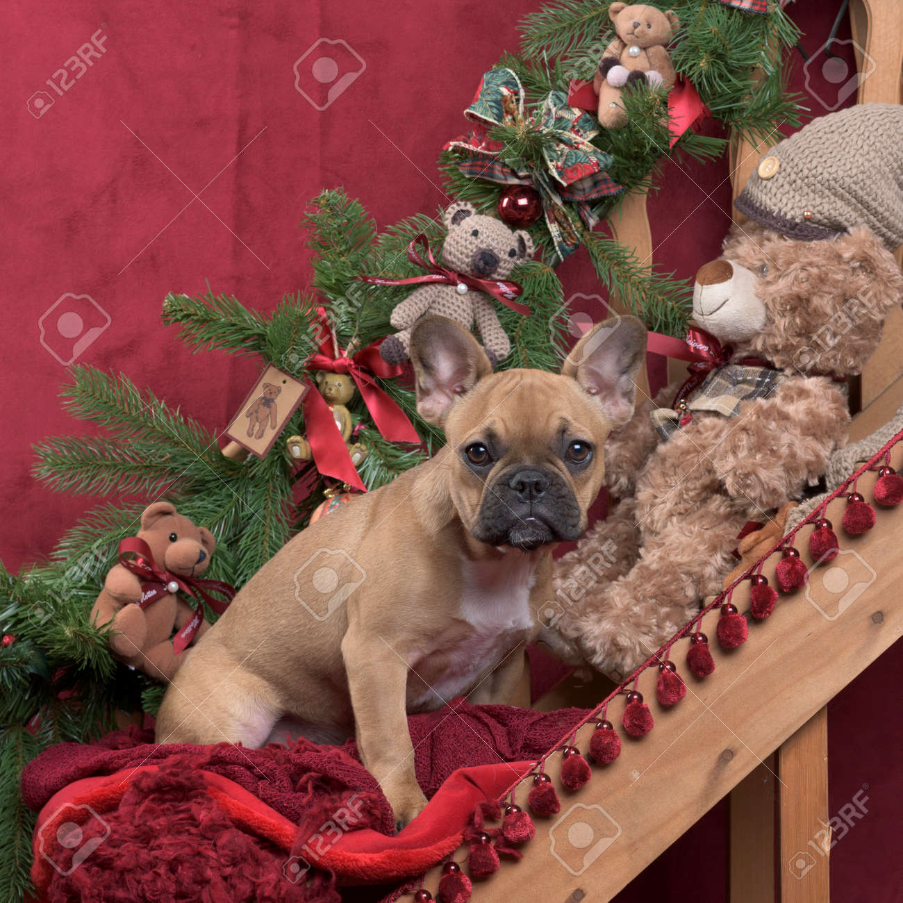 Puppy French Bulldog In Christmas Decoration 4 Monthsold