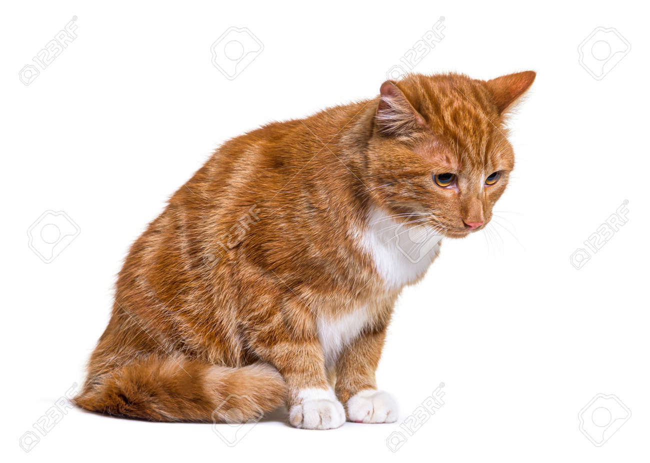 Depressive Ginger cat looking down, isolated - 171049340