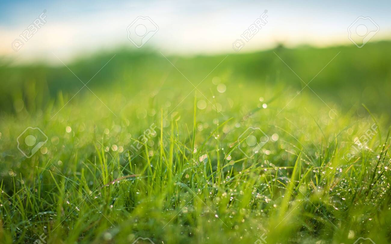 Beautiful nature background. Fresh grass scene and dew in morning time. - 120157895