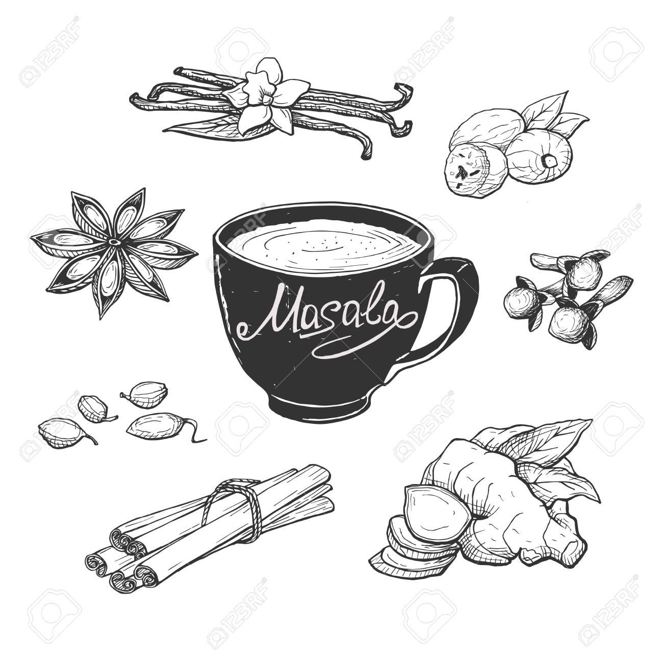 Vector illustration of masala milk tea cup and spices. Anise, clove, vanilla, cardamom, cinnamon sticks, ginger, nutmeg. Hand drawn engraving style. - 126336481