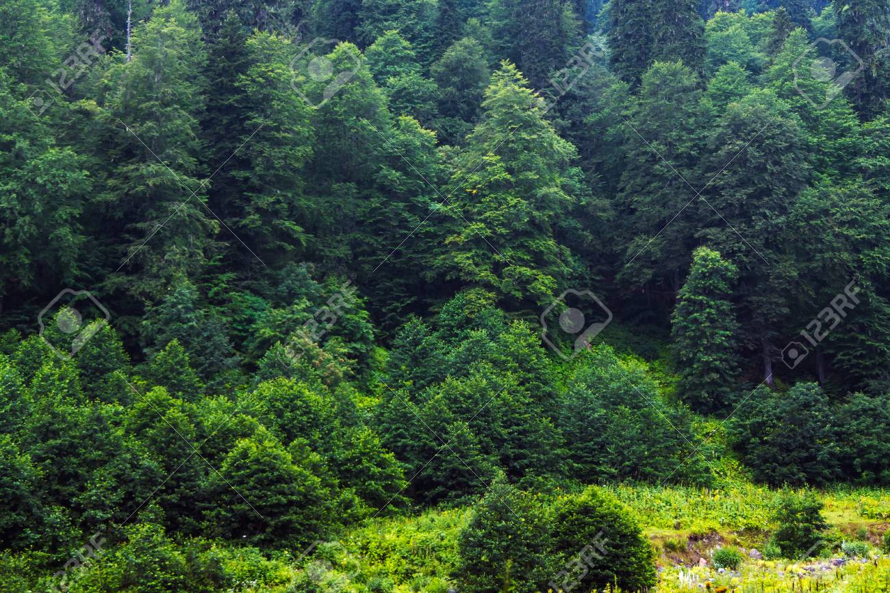 Green Trees In The Mountain Forest Beautiful Wallpaper With