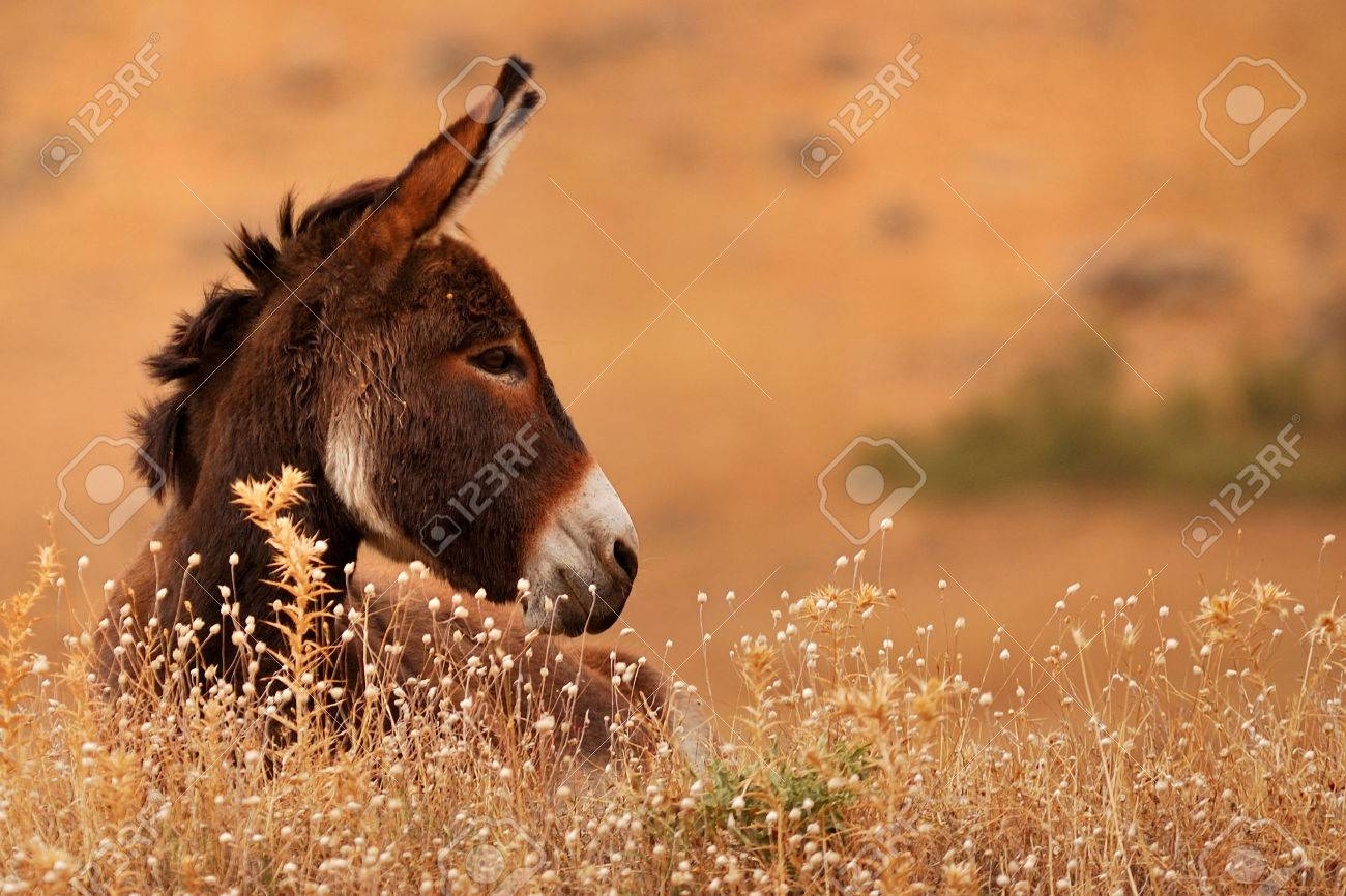 Donkey on natural enviornment - 29332497