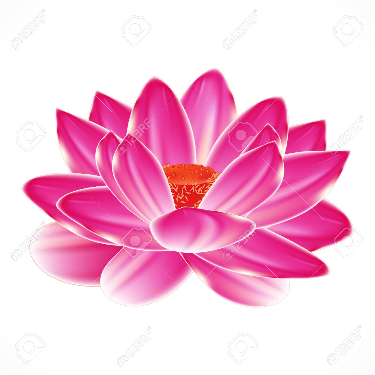 Water lily flower isolated element to your spa design royalty water lily flower isolated element to your spa design stock vector 8805962 dhlflorist Images