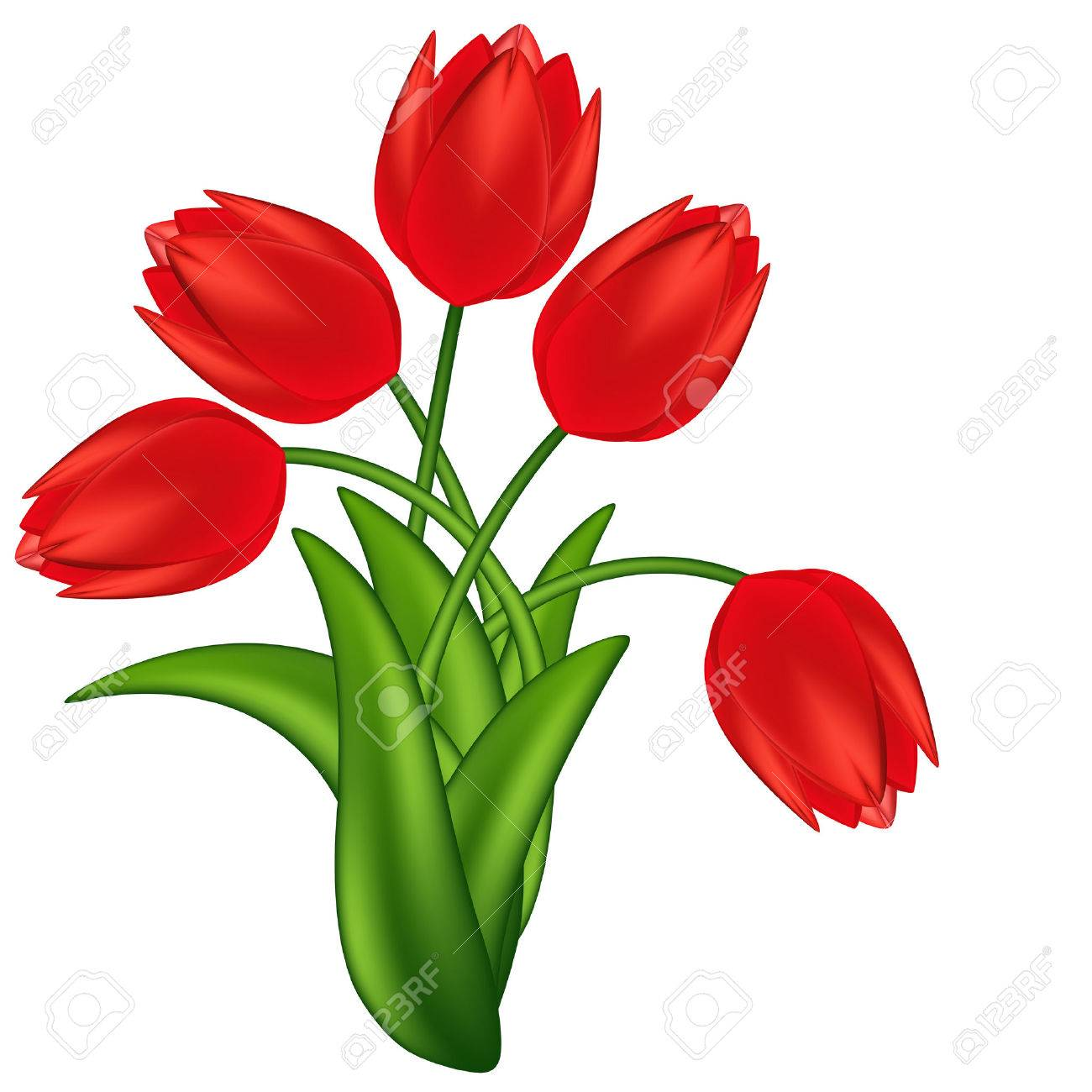 Vector illustration of red tulips. Gradient meshes. Stock Vector - 8977235
