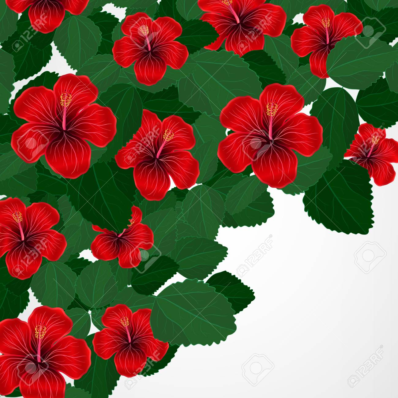 Floral Design Background Hibiscus Flowers Royalty Free Cliparts