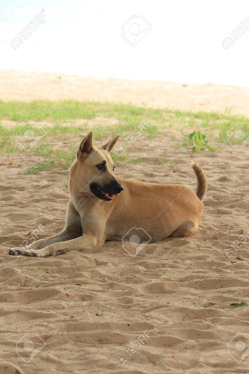 Dog at the Beach. Stock Photo - 20212627