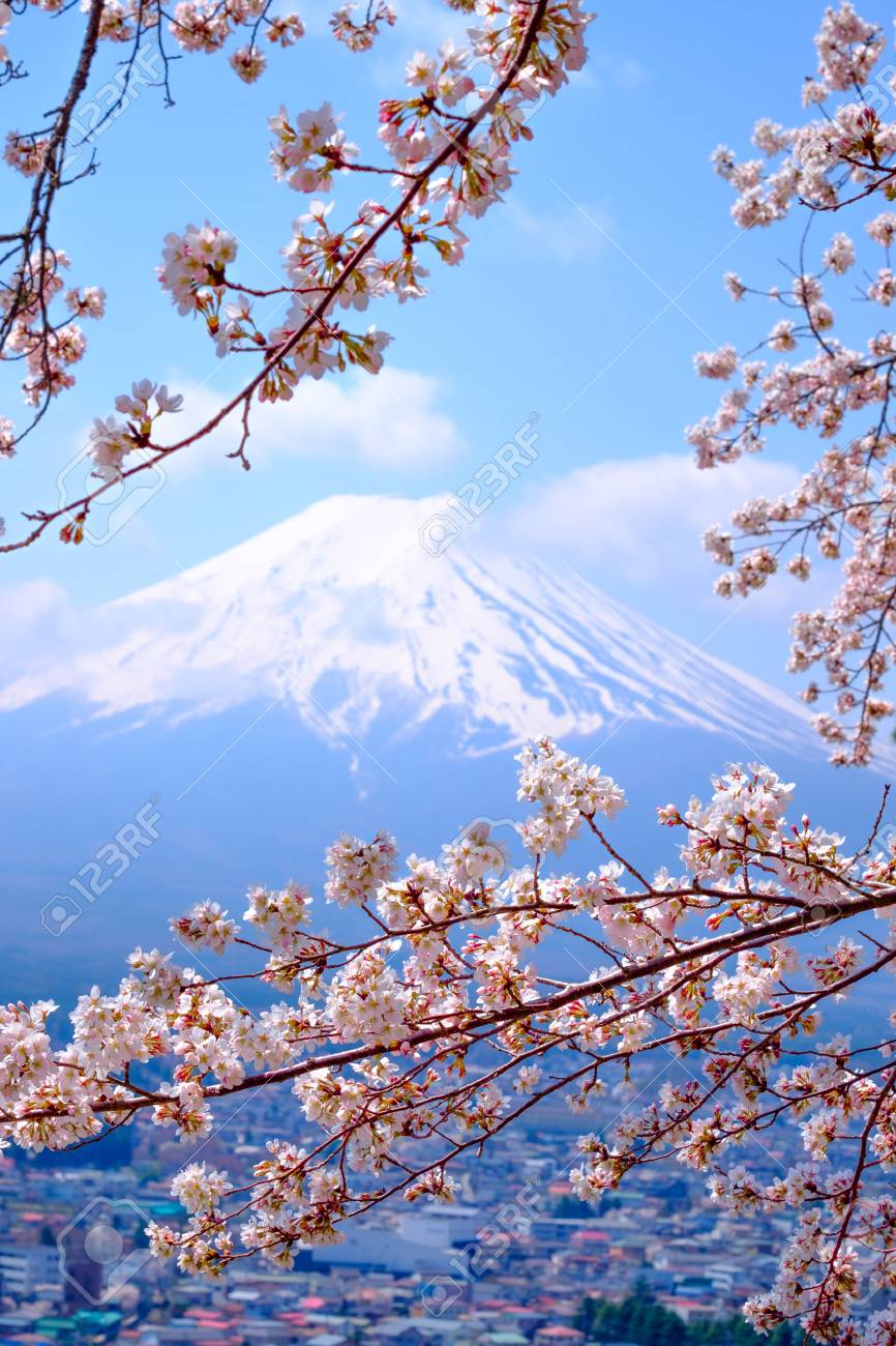 Mt Fuji And Cherry Blossom In Japan Spring Season (Japanese.. Stock Photo, Picture And Royalty Free Image. Image 57259700.