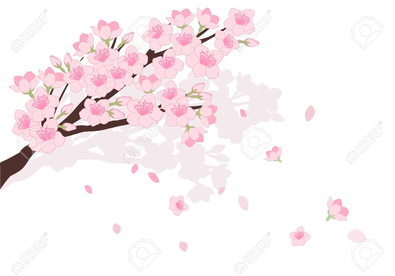 Cherry Blossom Illustration Royalty Free Cliparts Vectors And Stock Illustration Image 138914295