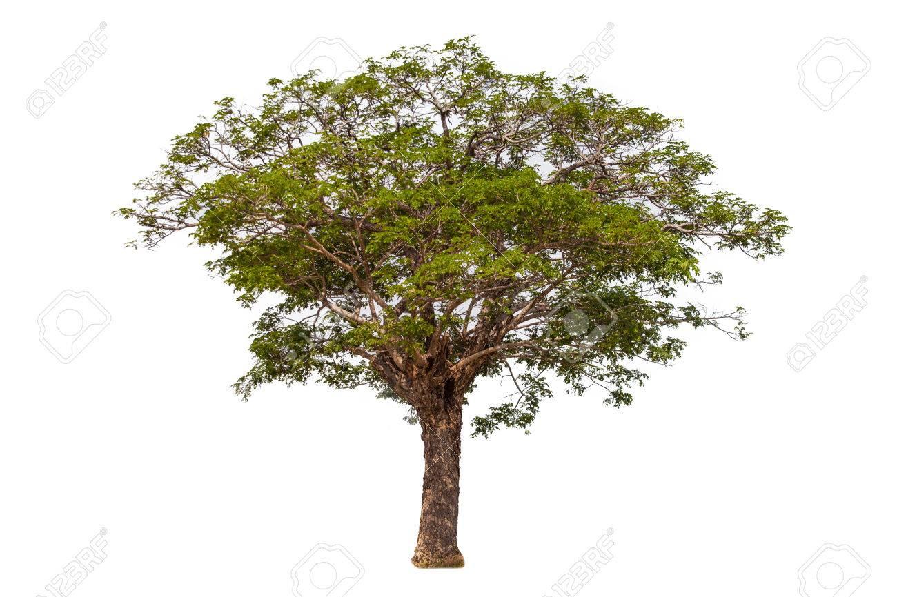 tree - 35606029