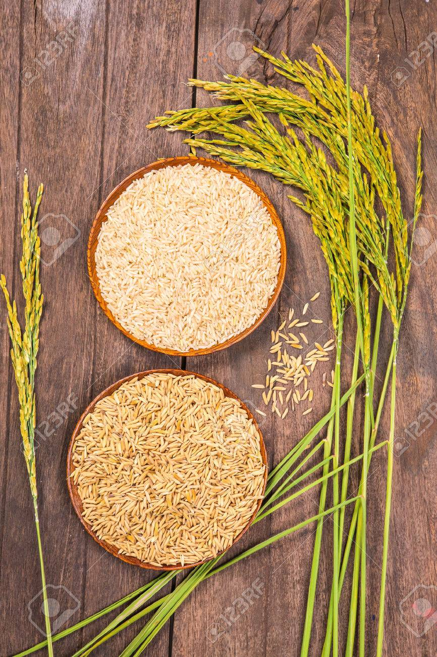 paddy and brown rice on the wooden plate and rice plant - 47982200