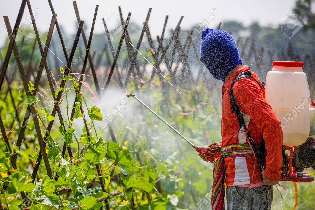 spraying pesticide - 47982204