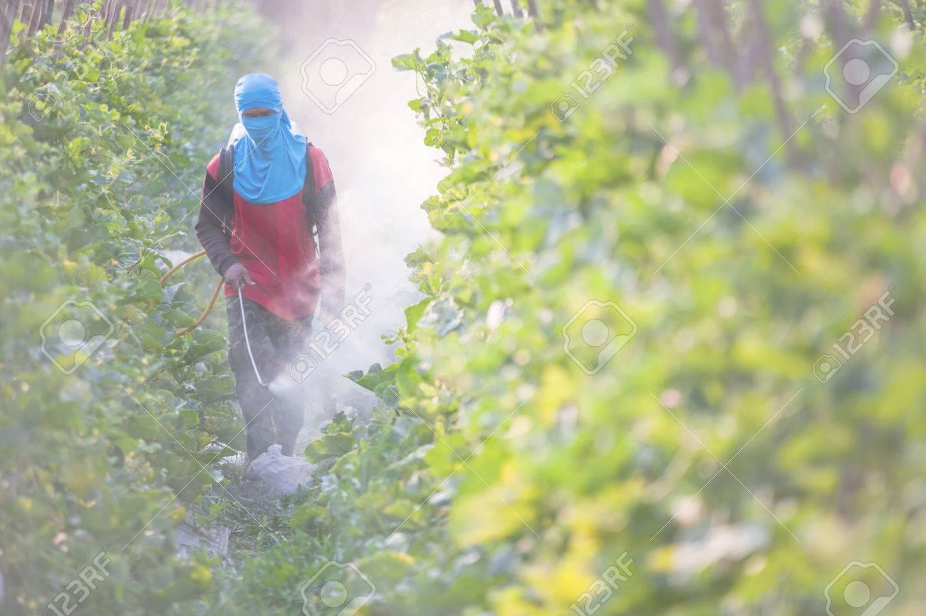 spraying pesticide - 48883234