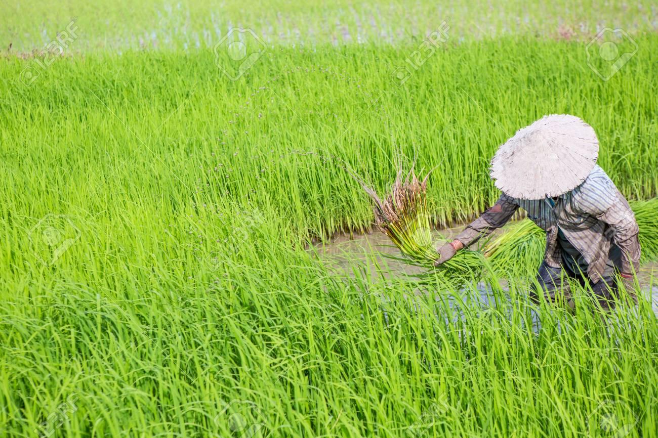 농사에 대한 이미지 검색결과