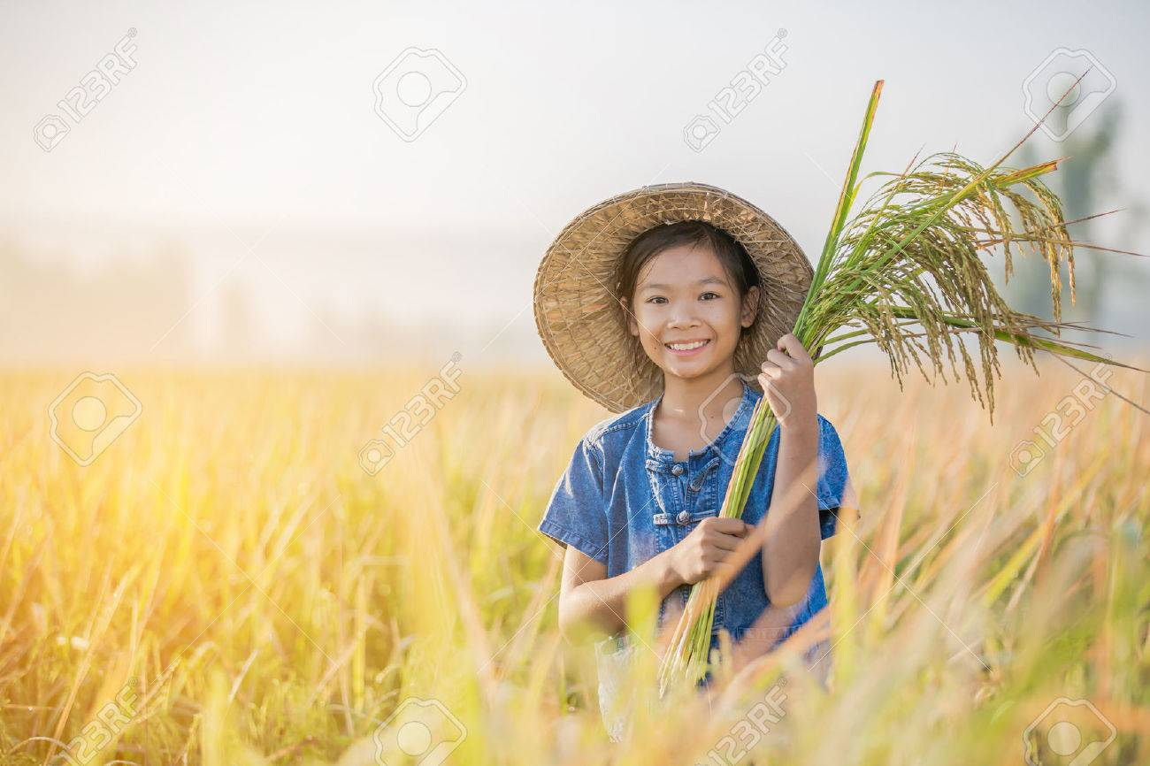 Asian children farmer on yellow rice field in the morning - 65741381