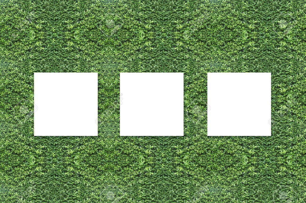 Drei Weiße Leere Rahmen Auf Einem Urlaub Wand Für Imagewerbung, Grün ...