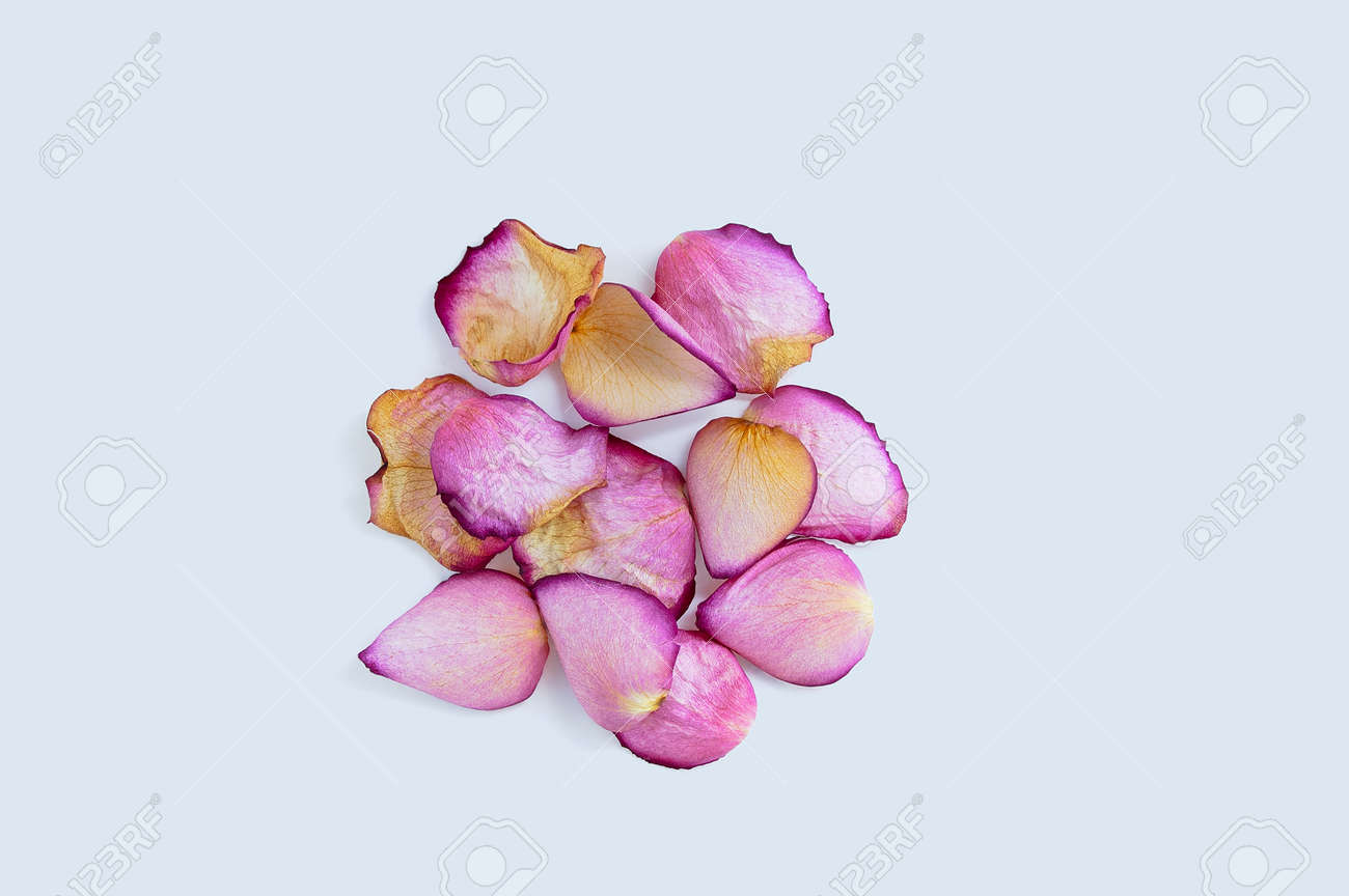 Heap of pink rose dry petals on a white background. - 167193049