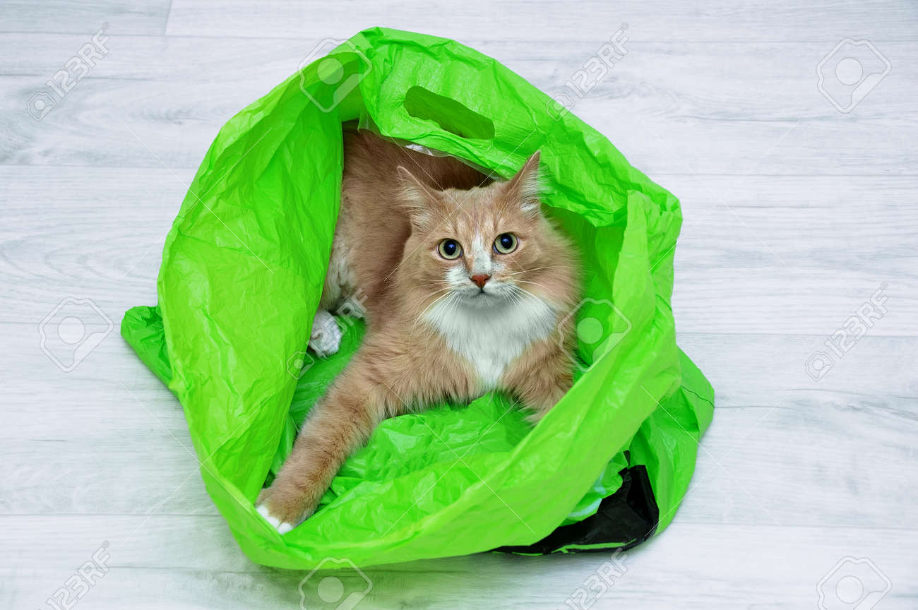 Beige cat in a green plastic bag lying on the floor of the room. - 171574303