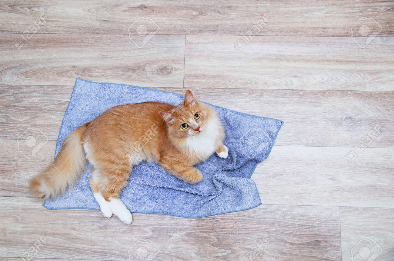Ginger cat lying on a gray rug on the floor of the room. View from above. - 172232554