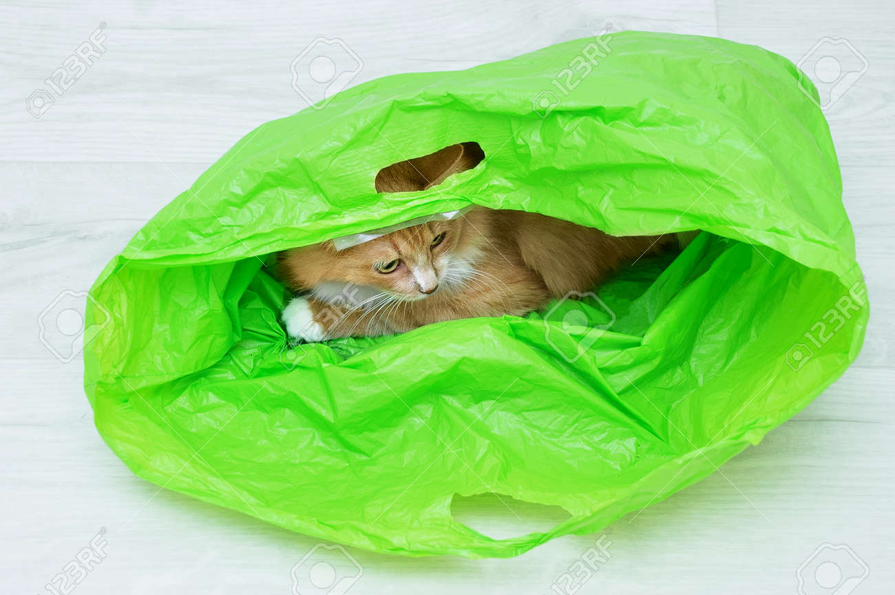 Ginger cat lying in a green plastic bag on the white wooden floor of the room. - 172232556