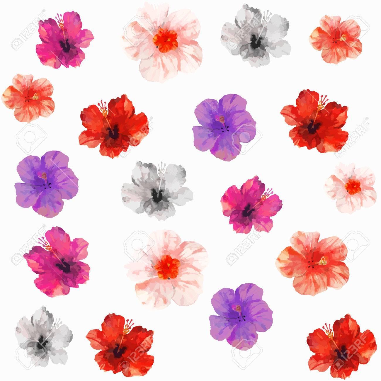 Vector Illustration De Seamless Floral Rouge Rose Violet Noir Et Blanc Des Fleurs Tropicales Isolées Dessin Aquarelle Sur Le Fond Blanc