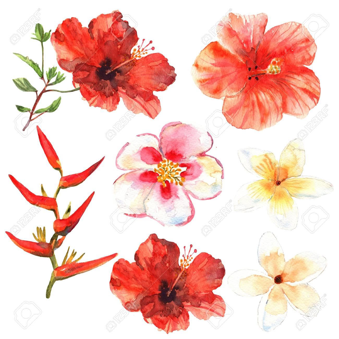 Conjunto Floral Coleccion Con Flores Tropicales Dibujo Acuarela