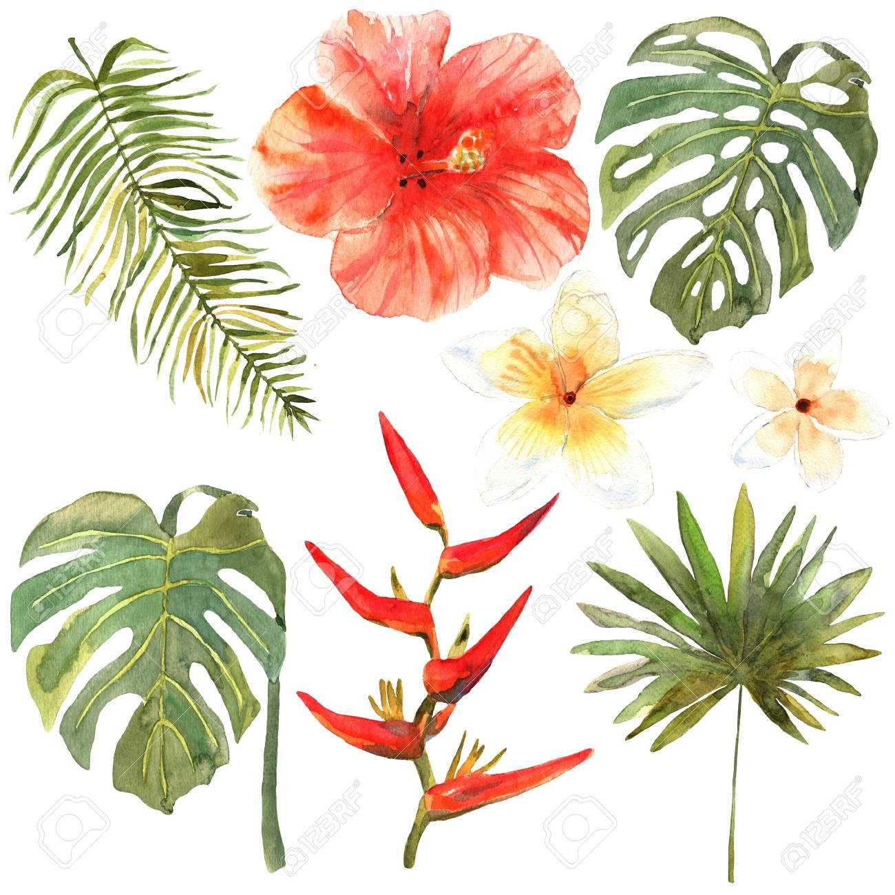 Conjunto Floral Coleccion Con Hojas Y Flores Tropicales Dibujo
