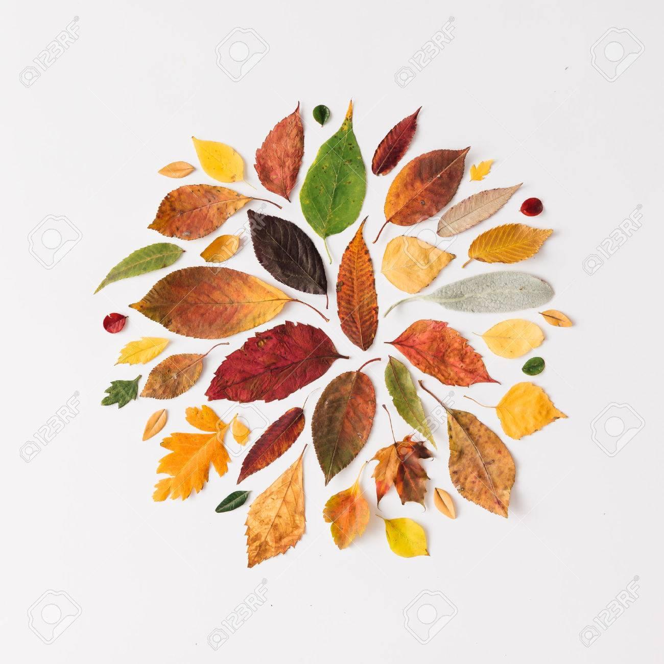 Kreative Gestaltung Der Bunten Blätter Im Herbst. Wohnung Lag. Saison  Konzept. Standard