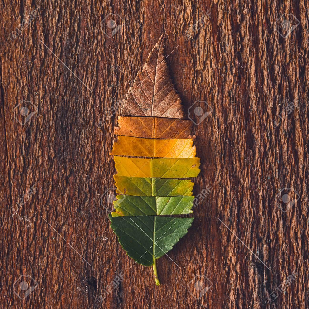 Fesselnd Kreative Gestaltung Der Bunten Blätter Im Herbst. Wohnung Lag. Saison  Konzept. Standard