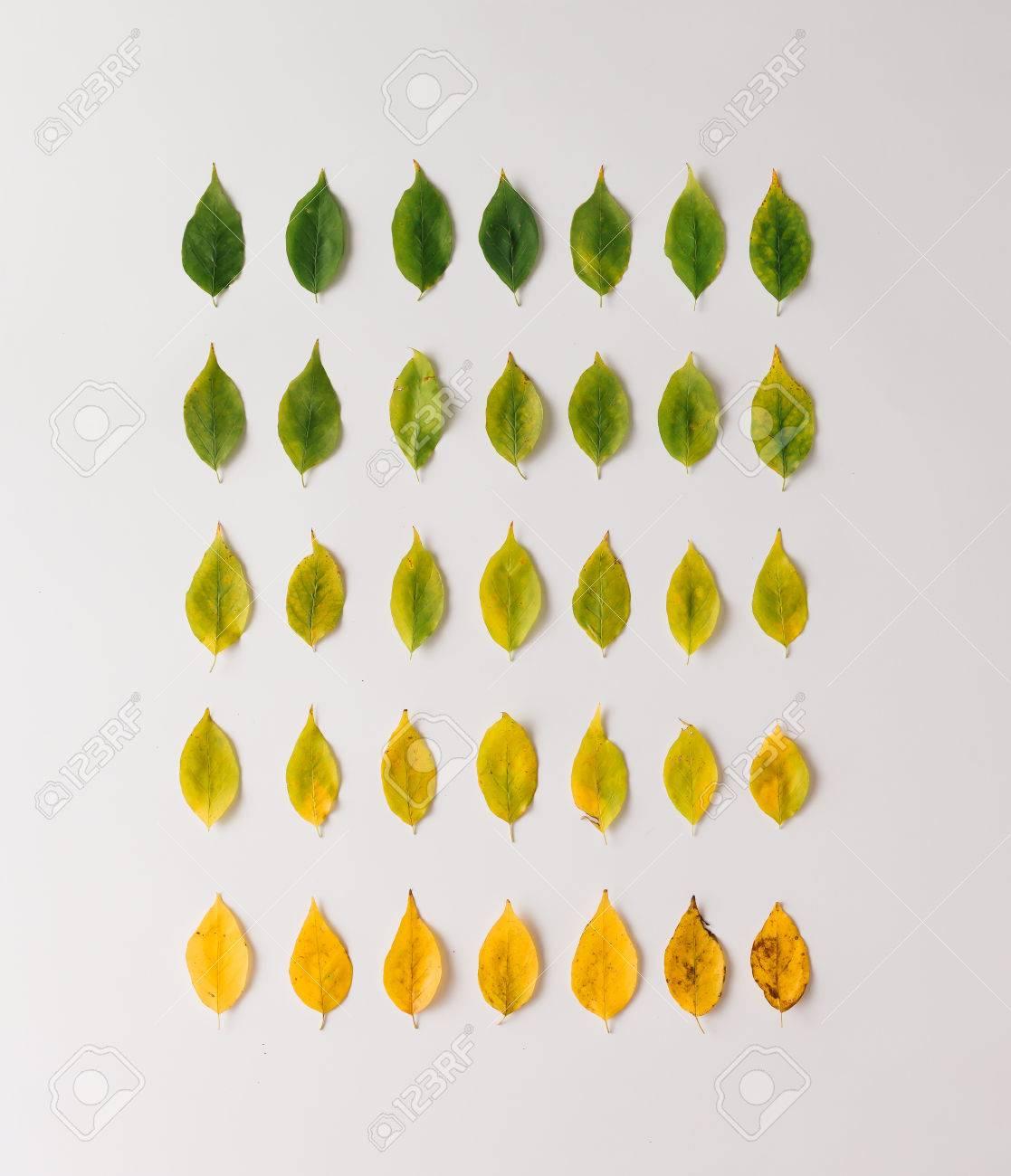 Schon Kreative Gestaltung Der Bunten Blätter Im Herbst. Wohnung Lag. Saison  Konzept. Standard