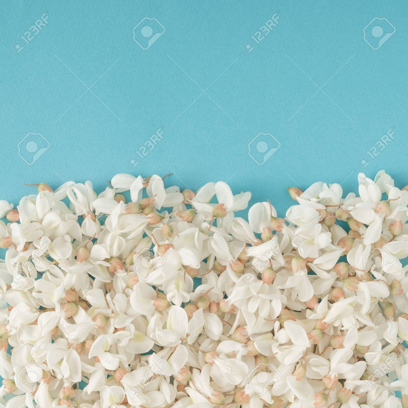 White flowers on blue background. Flat lay - 71478392