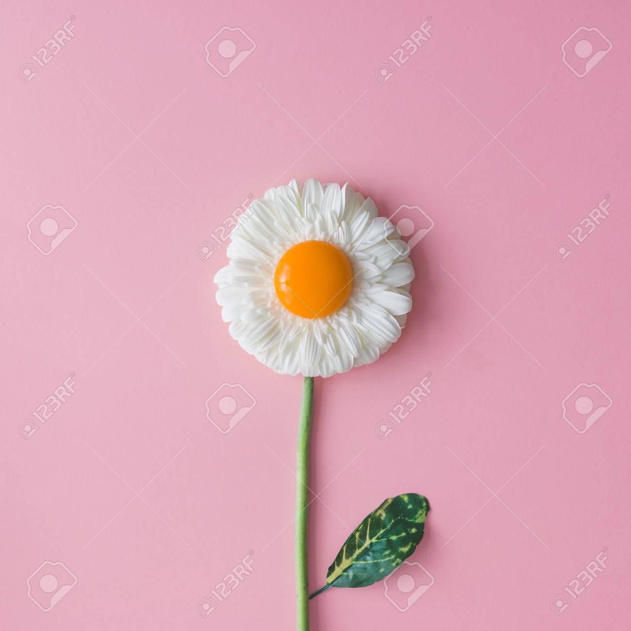 Daisy flower with egg yolk. Minimal concept. Flat lay. - 74236850