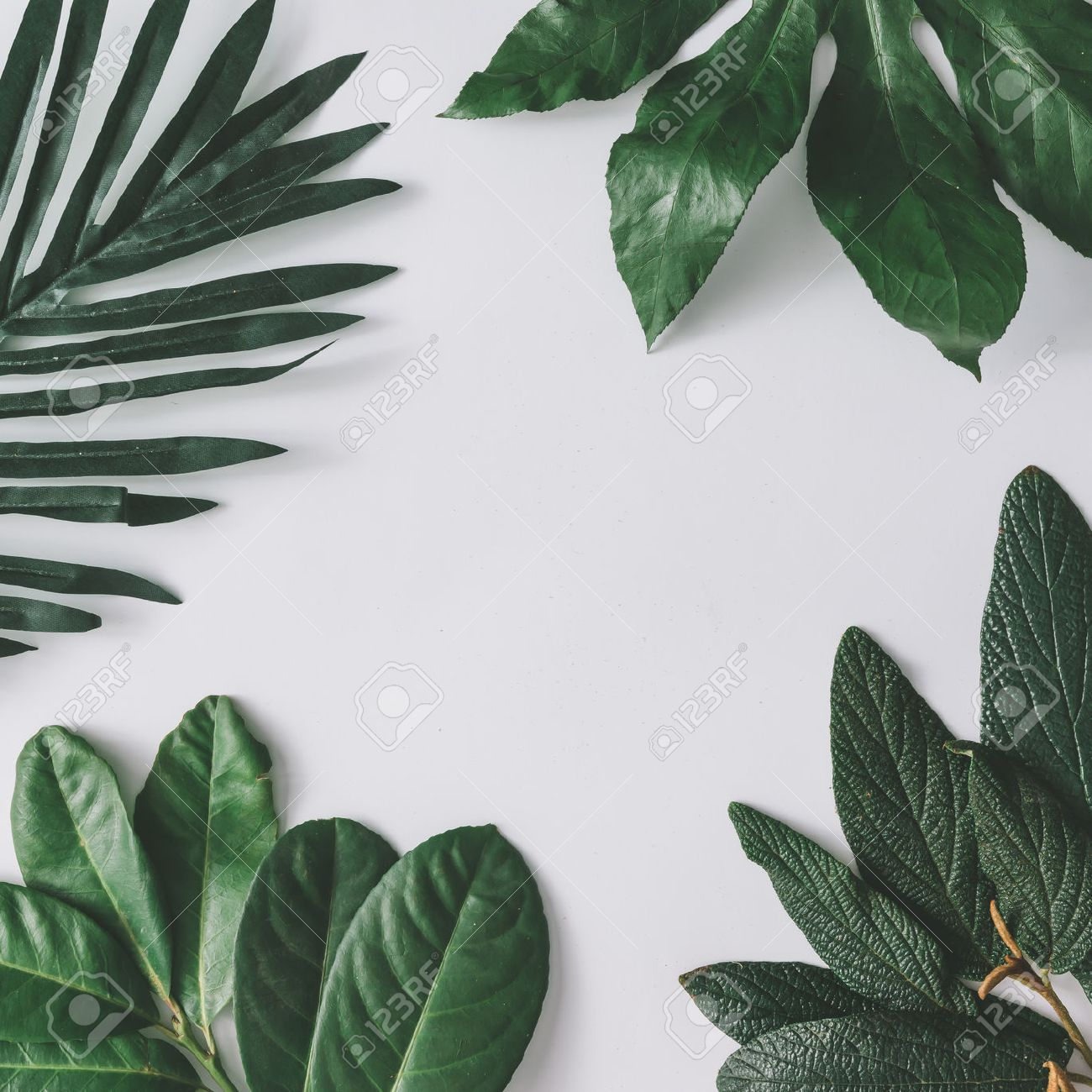 Creative minimal arrangement of leaves on bright white background. Flat lay. Nature concept. - 74236857