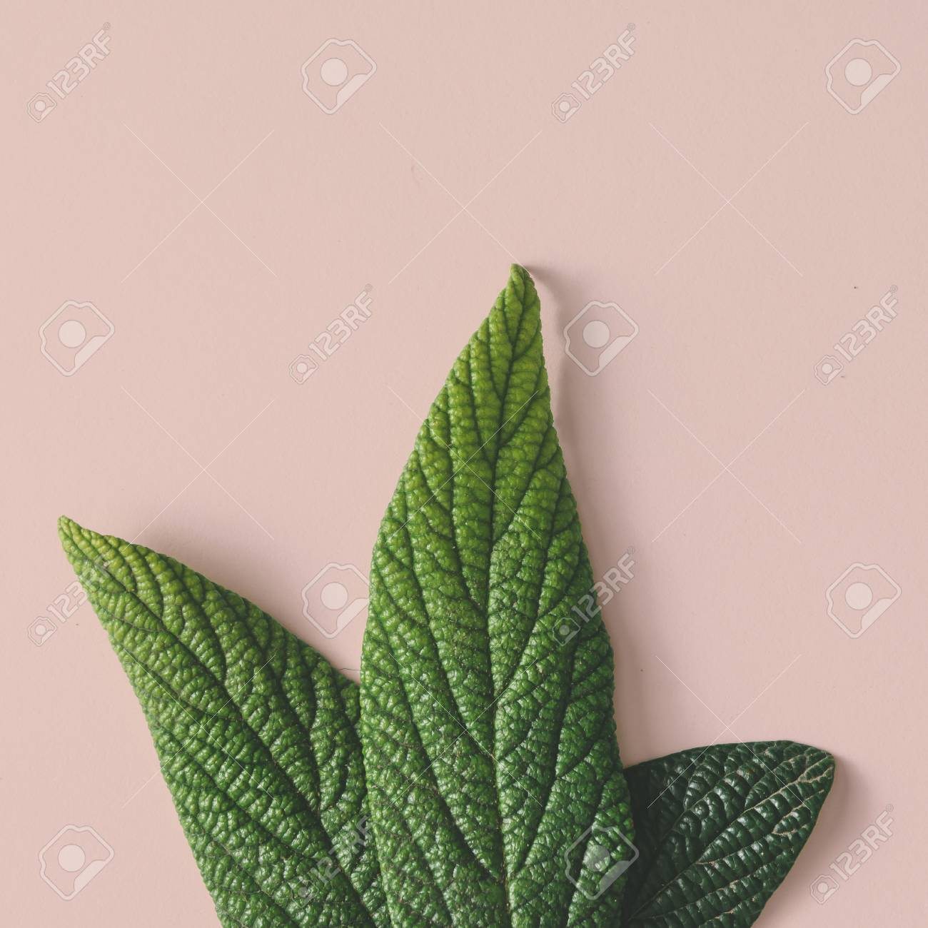 Creative minimal arrangement of leaves on bright white background. Flat lay. Nature concept. - 74236859