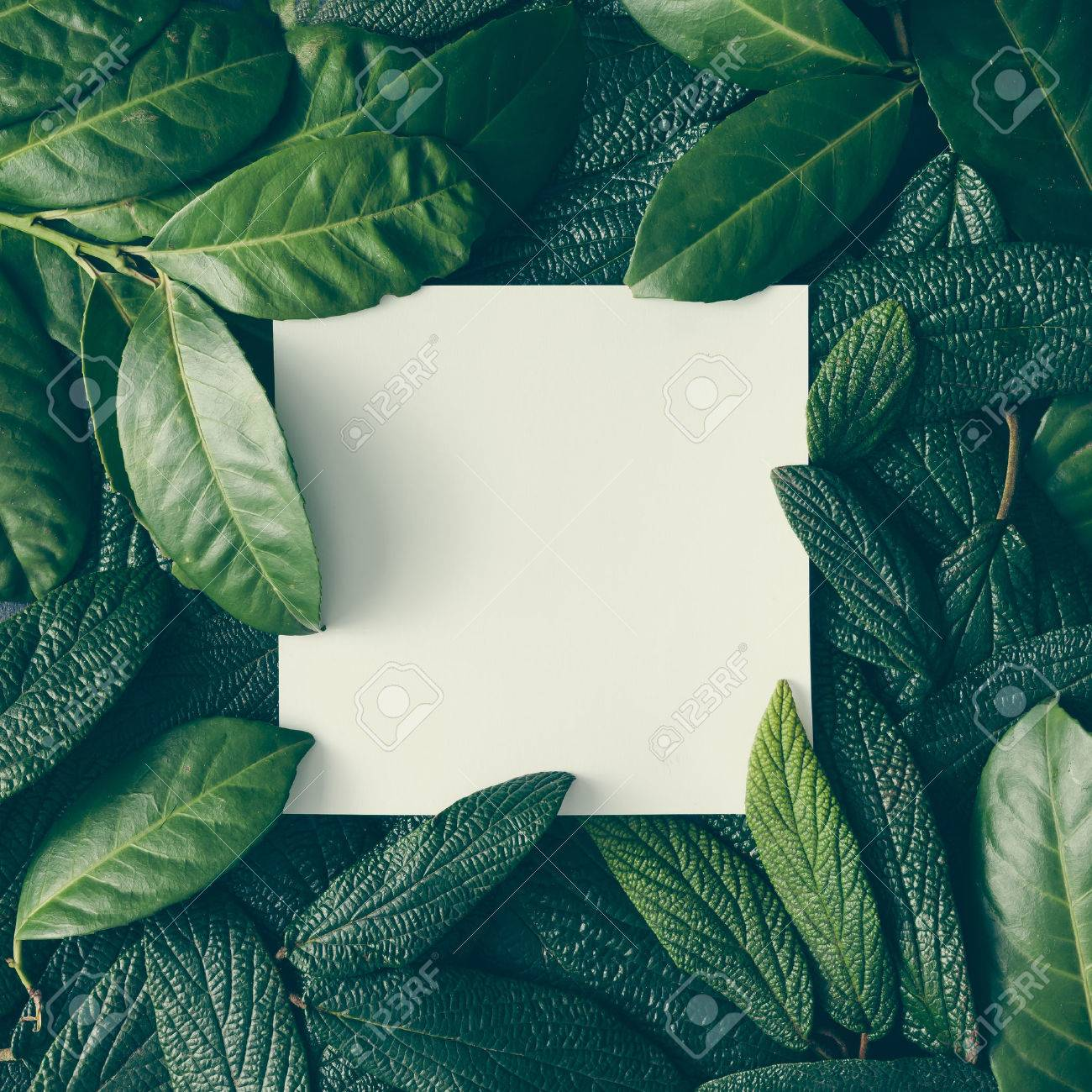 Creative layout made of green leaves with paper card note. Flat lay. Nature concept - 74236876