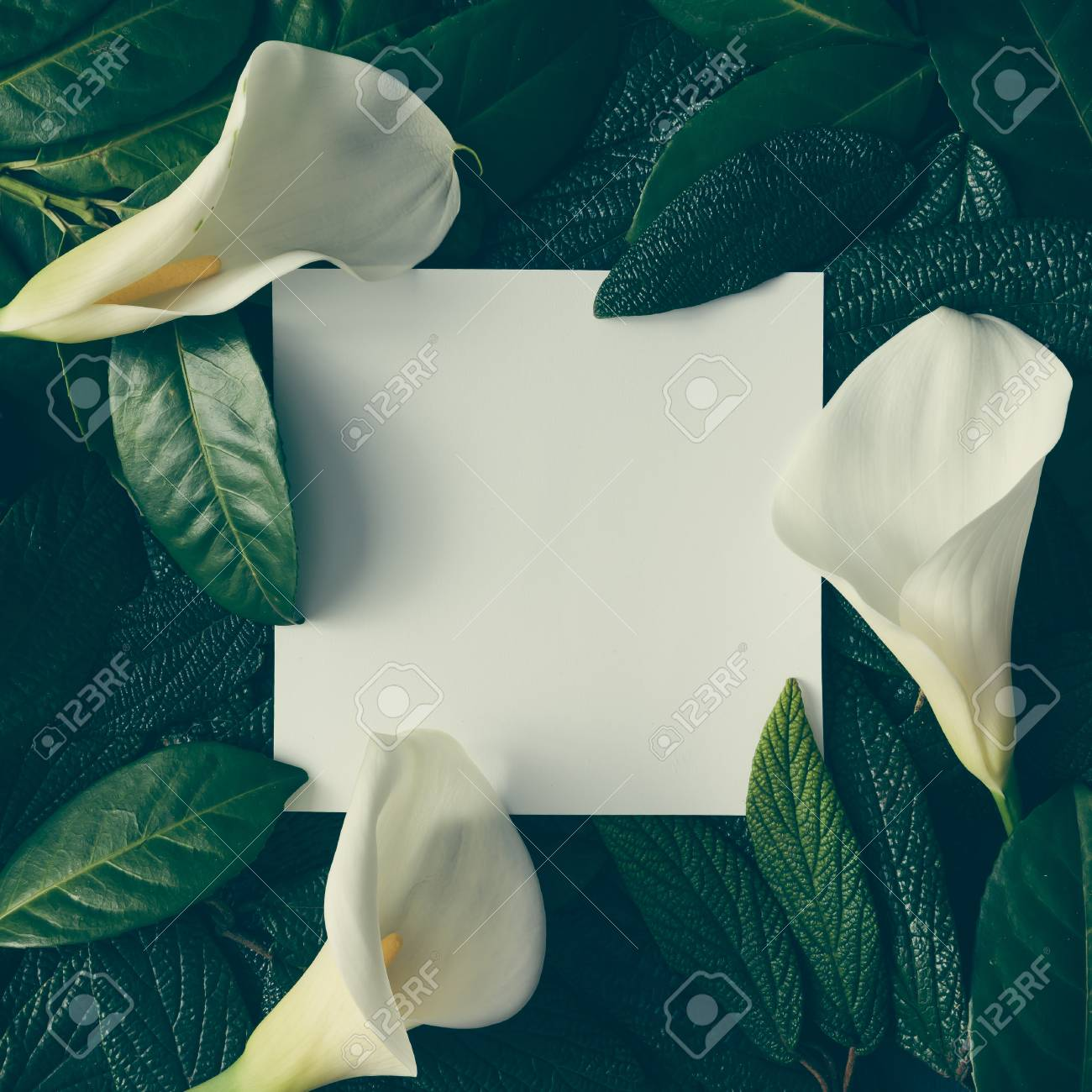 Creative layout made of green leaves and white flowers with paper creative layout made of green leaves and white flowers with paper card note flat lay mightylinksfo