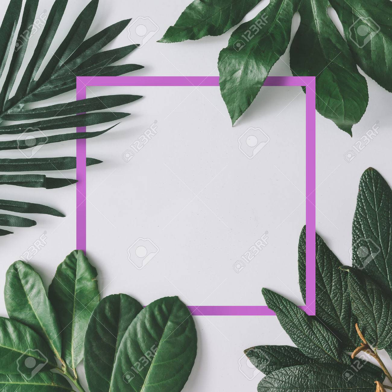 Creative minimal arrangement of leaves on bright white background with pink frame. Flat lay. Nature concept. - 74236973