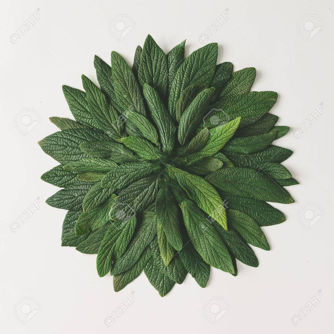 Creative minimal arrangement of green leaves. Nature concept. Flat lay. - 76154384