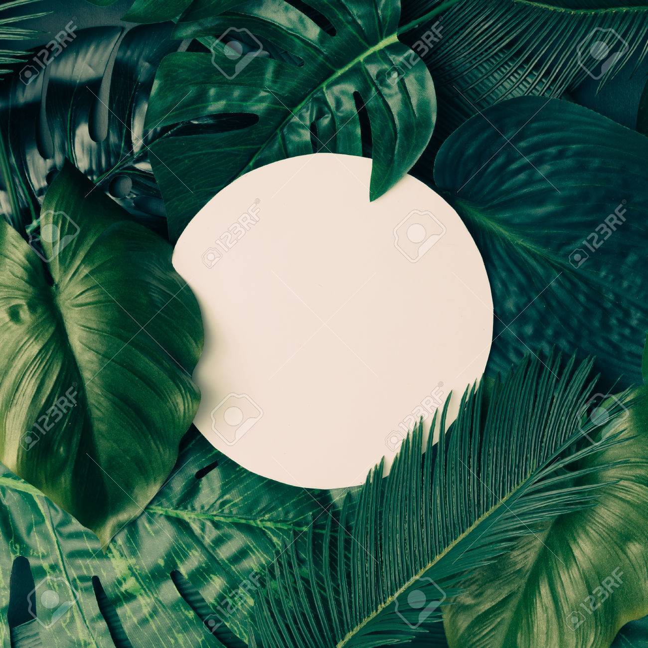Creative Tropical Green Leaves Layout With Copy Space Nature Stock Photo Picture And Royalty Free Image Image 76156382 When island inspirations come a calling, answer back with this lush and tropical setting. creative tropical green leaves layout with copy space nature