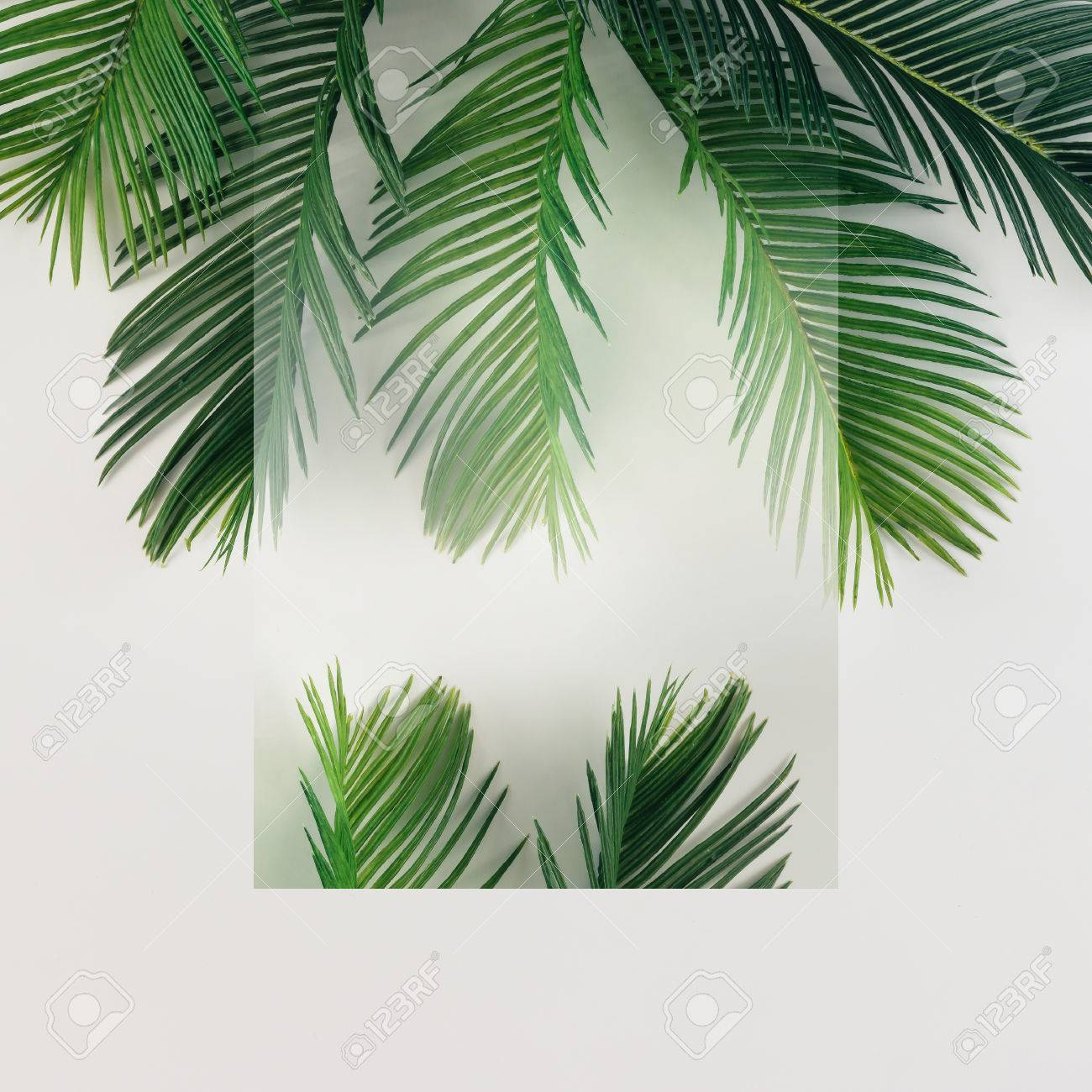 YongFoto 6.5x6.5ft Palm Tree Leaves Backdrop Cartoon Watercolor Photography Background Baby Shower Birthday Holiday Party Interior Decor Kids Adult Portarit Photo Shoot Studio Props Wallpaper