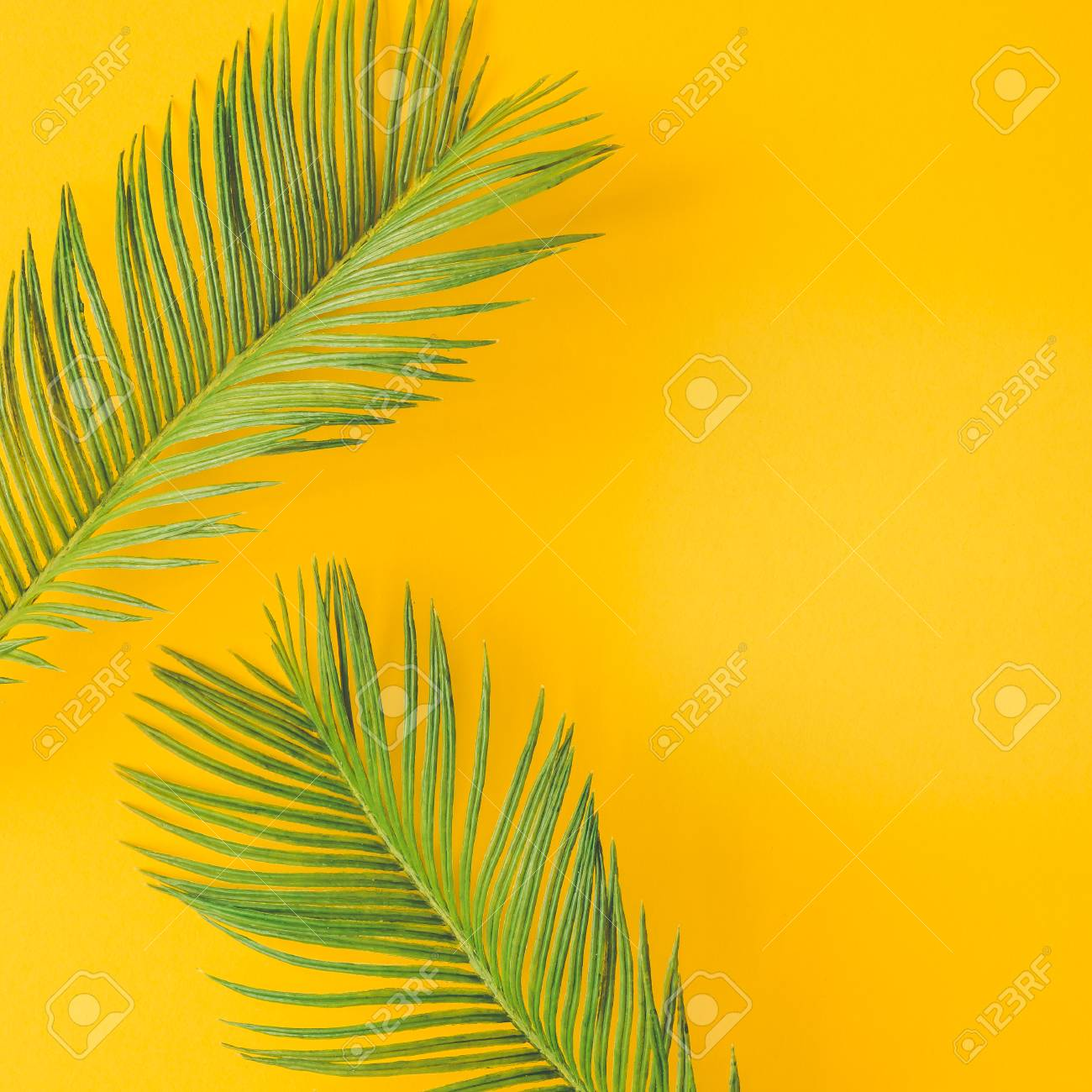 Green Tropical Palm Leaves On Bright Yellow Background Minimal Stock Photo Picture And Royalty Free Image Image 96874755 Find the best free stock images about yellow background. green tropical palm leaves on bright yellow background minimal