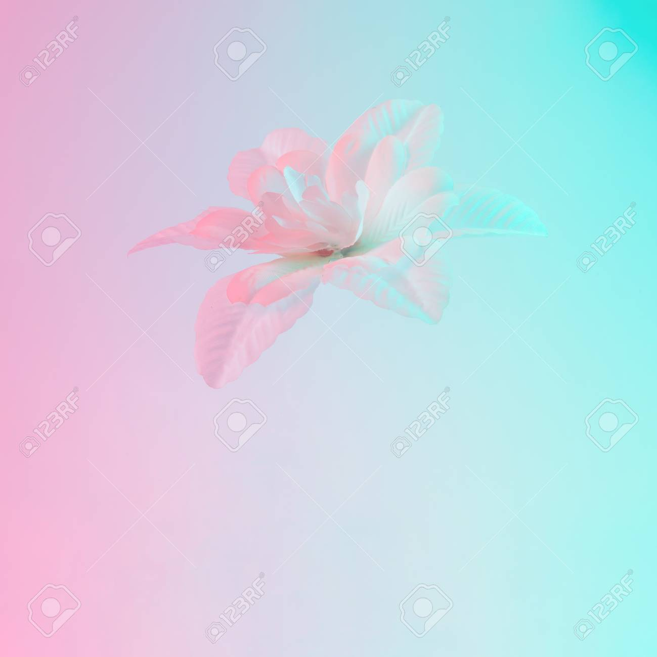 White flower in vibrant bold gradient holographic colors. Concept art. Minimal surrealism. - 97852159